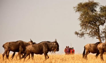 4-Day Masai Mara Walking Safari